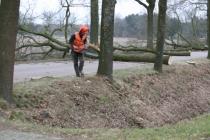 2011 - Bomen kappen